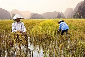 Việt Nam lọt top 10 điểm đến để tận hưởng 'Gap year'