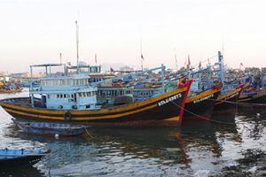 Bình Thuận: Xóa nạn tàu cá đánh bắt bất hợp pháp
