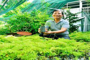 Vườn trồng toàn loài cây thuốc bổ, U45 kiếm 15 triệu mỗi tháng