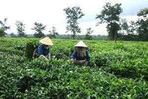 Đức Long Gia Lai mua lại thương hiệu chè và cà phê của Gia Lai