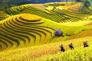 Những điểm đến thú vị nhất định phải đi vào mùa thu ở Việt Nam