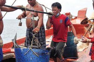 Bỏ nghề biển nuôi loài cá cực thơm ngon, dân đảo Hòn Chuối đổi đời