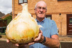 Đào được củ hành tây 'khủng' hơn 4 kg, đủ 30 người ăn
