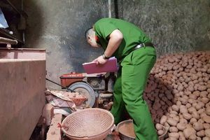 Phát hiện thêm 1 vụ 'chế biến' khoai tây Trung Quốc thành hàng Đà Lạt