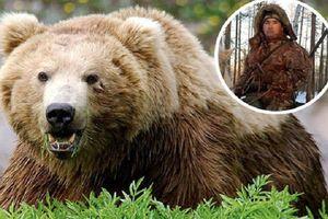 Cặp gấu nâu tấn công và ăn thịt người trong khu bảo tồn
