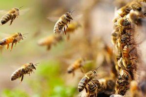 Chọc tổ ong, bé trai 5 tuổi bị đốt sốc phản vệ, suy đa phủ tạng