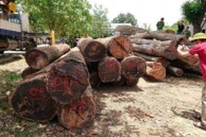 Bắt Hạt trưởng Kiểm lâm tiếp tay cho trùm gỗ lậu