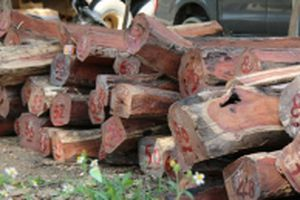 Gia đình Chi cục trưởng Kiểm lâm Đác Lắc giao nộp tám m3 gỗ