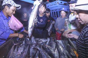 Đà Nẵng đấu giá hải sản ngay tại cảng cá