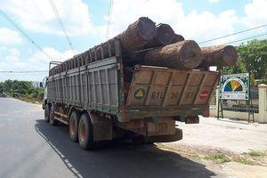 Vụ Phượng 'râu': Chi cục Trưởng Kiểm lâm nộp 8m3 gỗ