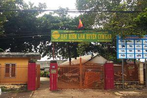 Vụ trùm gỗ lậu Phượng 'râu': Bắt khẩn cấp Hạt trưởng kiểm lâm H.Cư Mgar