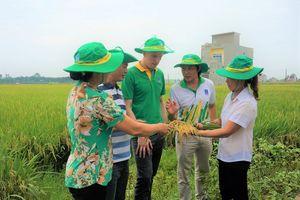 Phân bón Phú Mỹ được người nông dân tin dùng