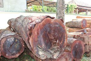Hạt trưởng hạt kiểm lâm nhận hàng trăm triệu của trùm gỗ lậu Phượng 'râu'