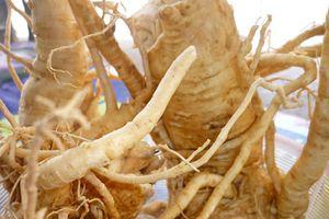 Không ngờ bài thuốc từ rễ đinh lăng chữa được bệnh liệt dương