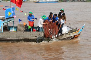 An Giang: Thả trên 7,6 tấn cá giống tái tạo nguồn lợi thủy sản