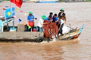 An Giang: Thả trên 7,6 tấn cá giống tái tạo nguồn lợi thủy sản tự nhiên