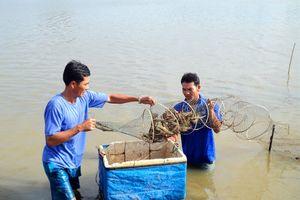 Cà Mau: Nuôi tôm sinh thái đạt chuẩn quốc tế