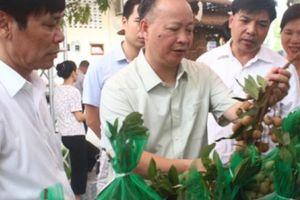 Hà Nội: Trồng nhãn đặc sản, miền đất này thu 400 tỷ đồng/năm