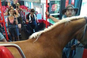 Bị đuổi khỏi tàu vì… ngựa