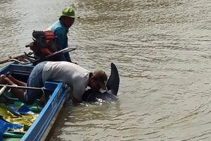 Cứu cá heo 150 kg trôi dạt vào bờ