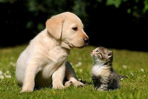 Anh đề xuất cấm bán chó mèo nhỏ tại cửa hàng