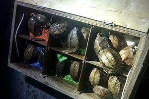 Quảng Nam: Phát hiện 126 cá thể động vật hoang dã quý hiếm