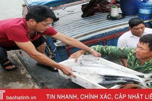 Hà Tĩnh đạt sản lượng thủy hải sản gần 30.000 tấn, trị giá hơn 1.500 tỷ đồng