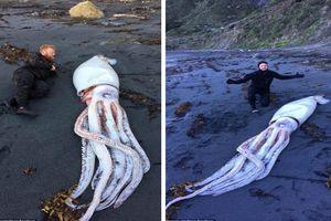 Mực 'quái vật' dài 4,2 m dạt bờ biển New Zealand