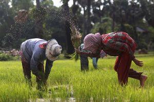 Campuchia đưa blockchain vào đồng ruộng