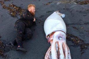Mực khổng lồ bất ngờ dạt vào bờ biển New Zealand