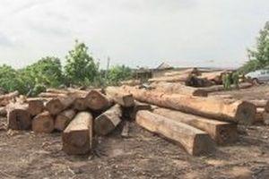 Khởi tố Hạt trưởng Kiểm lâm tiếp tay cho trùm buôn lậu gỗ