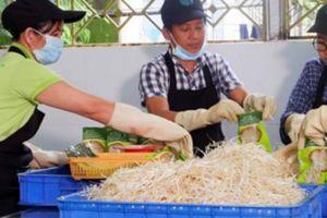 Giảng viên đại học làm nông dân trồng rau sạch