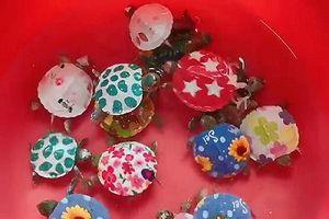 Giới bảo tồn phản đối hành động vẽ sơn lên mai rùa để bán
