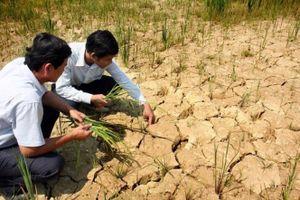 Ứng phó với hạn hán vùng ven biển miền Trung: Cần biện pháp quản lý cây trồng tổng hợp