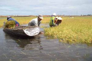 Lũ ở Đồng bằng sông Cửu Long có khả năng ảnh hưởng lớn đến sản xuất