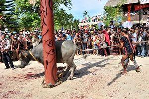 Bộ Văn hóa yêu cầu kiểm tra vụ thu tiền làm lễ hội đâm trâu