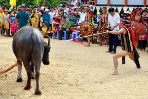 Huế: Xã nghèo thu tiền người dân tổ chức lễ hội đâm trâu 'quên' xin phép