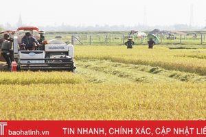 'Chạy' mưa lớn, Hà Tĩnh đã thu hoạch 500 ha lúa hè thu