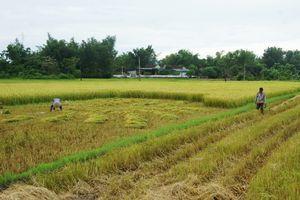 Nông dân Hà Tĩnh sấp ngửa giữa trưa để kịp cổ vũ Olympic Việt Nam đá bán kết