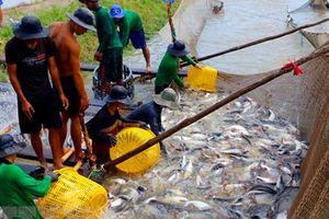 Các doanh nghiệp thủy, hải sản nhập hàng lớn nhưng 'quên' kê khai?