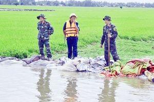 Nước lũ làm vỡ bờ bao ở An Giang, hàng trăm hecta lúa vụ 3 bị thiệt hại nặng