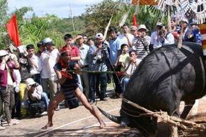 Tổ chức lễ hội đâm trâu, xã bắt dân đóng góp 300 ngàn đồng mỗi hộ