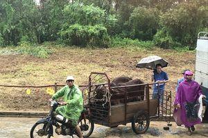 Huyện Thạch Thất: Đa dạng giải pháp giảm nghèo