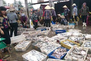 Bến cá Ngọc Hải, điểm đến không thể thiếu khi đi du lịch Đồ Sơn