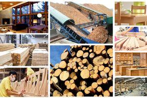 Phát triển ngành chế biến gỗ, lâm sản XK thành ngành kinh tế mũi nhọn