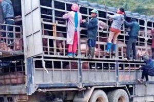Ngăn chặn dịch tả lợn châu Phi: Xử lý nghiêm buôn lậu từ biên giới