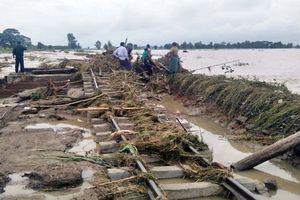 Myanmar: Gần 90 làng chìm trong nước lũ