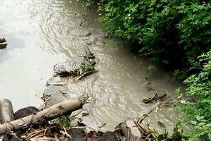 Xử phạt 4 doanh nghiệp chế biến thủy sản xả nước thải vượt quy chuẩn