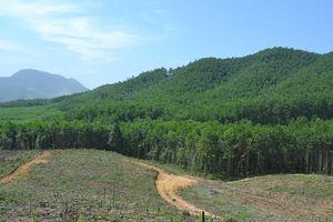Quảng Nam: Gỡ khó để phát triển rừng