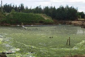 Hà Tĩnh: Nguy cơ ô nhiễm môi trường từ các dự án nuôi tôm